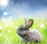 sweet easter bunny in the spring meadow - stock photo