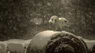 Stock Video Footage of An owl prepares itself for flight. Incredible 4K slow motion footage.