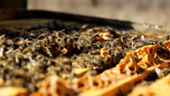 Stock Video Footage of frame Beekeeping, Bees And Hives ,bees in apiary,beehive,Beekeeper