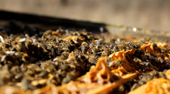 Bees And Hives ,bees in apiary,beehive,Beekeeper Stock Footage