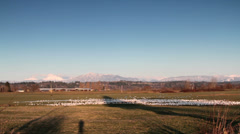 Snow Geese, Farm Field and Mountains Stock Footage