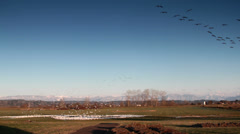 Snow Geese Arriving, Farm, Mountains Stock Footage