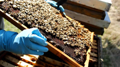 Stock Video Footage of Beekeeping, Bees And Hives ,bees in apiary,beehive,Beekeeper