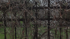 Old haunted cemetery [rusty fence] Stock Footage