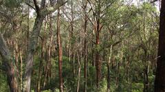Australian Landscape - eucalypt forest Stock Photos