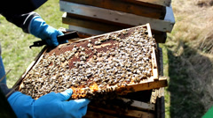 Stock Video Footage of frame of Beekeeping, Bees And Hives ,bees in apiary,beehive,Beekeeper