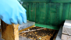honey Beekeeping, Bees And Hives ,bees in apiary,beehive,Beekeeper - stock footage