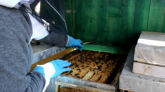 Beekeeping honey , Bees And Hives ,bees in apiary,beehive,Beekeeper - stock footage