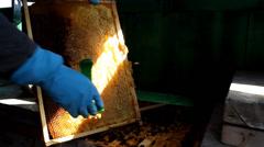 Beekeeping, Bees And Hives ,bees in apiary,beehive,Beekeeper - stock footage