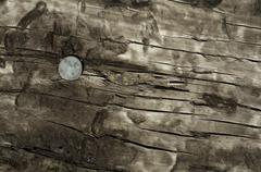 top of railroad tie with spike - stock photo