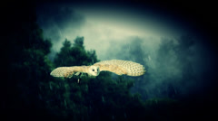 An owl flying though the rain. Stock Footage