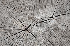 Closeup view of grainy wooden texture Stock Photos