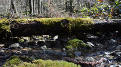 Landscape, creek, spring, Italy Stock Footage