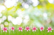 Stock Photo of spring or summer season abstract nature background with grass and blue sky in