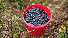 Full bucket of blueberries Stock Footage