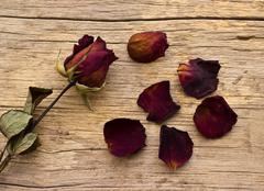 Dry red roses on old wooden background Stock Photos