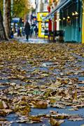Autumn leaves fall of pavements and streets Stock Photos