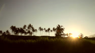 Stock Video Footage of Grass And Coconut Trees At Sunset