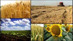 Barley,sunflower,corn,wheat,soya ,soybean fieagricultural fields multiscreen mix Stock Footage