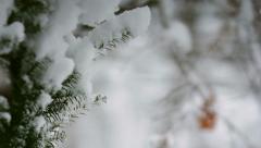 Snowy Pine Tree Rack Focus Stock Footage