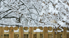 Snowy Fence Wide Stock Footage