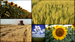 corn,sunflower,wheat,barley,soya agricultural fields multiscreen mix - stock footage