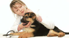 veterinarian inspects puppy - stock footage