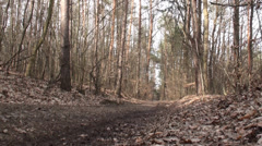 Road Passing Through Forest 1 - stock footage