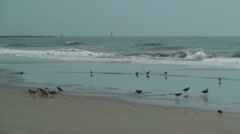 Birds on the beach during low tide - stock footage