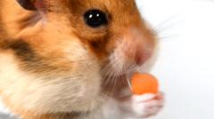 Hamster eat Stock Footage