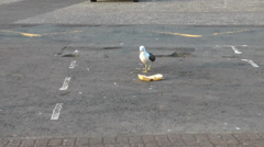 Seagull and a polystyrene chip box in a car park Stock Footage