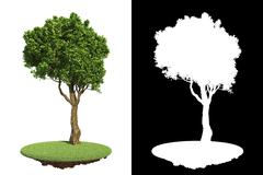 Green Tree with Detail Raster Mask. Stock Illustration