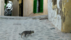 Europe Spain Balearic Ibiza Eivissa city 161 cat plays with insect Stock Footage