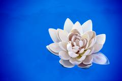 Artificial water lilly Stock Photos