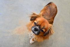 dog looking - stock photo