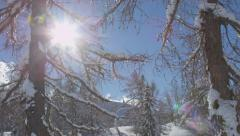 AERIAL: Snowy winter trees in European Alps Stock Footage