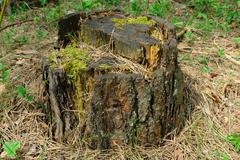 Old stump Stock Photos