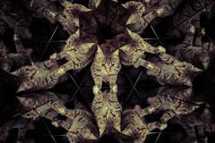 common cat inside a kaleidoscope, mirrors - stock illustration