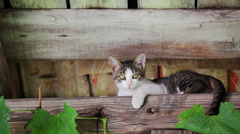 Domestic cat lying at wood stancil - stock footage