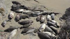 Elephant Seals Enjoying The Warm Sunshine On Beach Stock Footage