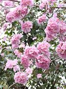 Pink flowers blooming on winter. Stock Photos