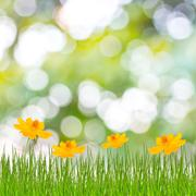 Spring or summer season abstract nature background with grass and blue sky in Stock Photos