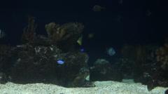 Shark swimming away Stock Footage
