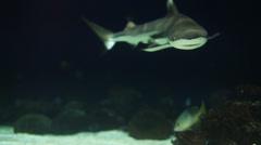Shark swim away - stock footage