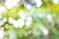 Defocused abstrakti vihreä tausta Kuvituskuvat