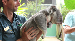 Zoo Keeper at Wildlife Habitat handles a koala - stock footage