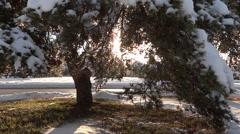 Winter Village - 26 - Snowy Trees, Street, Road, Cars Stock Footage