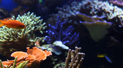 Coral and Sea Life Stock Footage