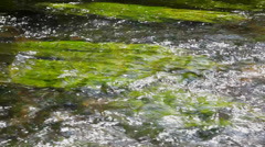 Water stream surface at sunny summer day Stock Footage