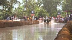 Kambala season traditional buffalo racing India, slow motion Stock Footage